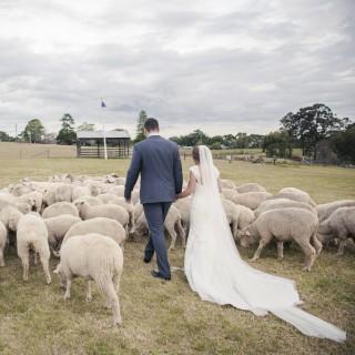 Tobruk Sheep Station Wedding
